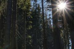 Markus / Friedlicher Wald