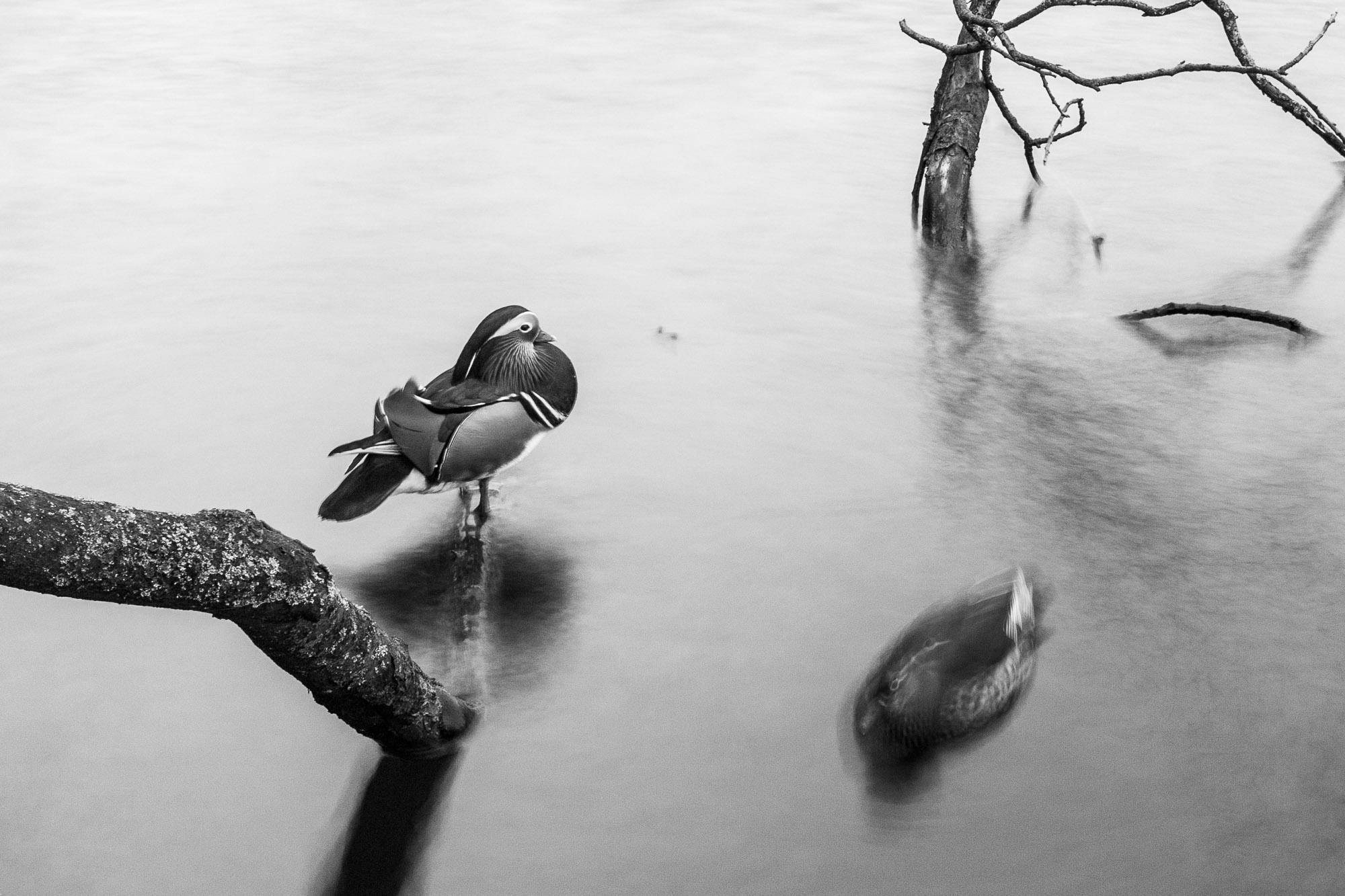 #4 Birdwatching