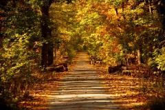 dotmatchbox / Herbst ,dotmatchbox / Herbst
