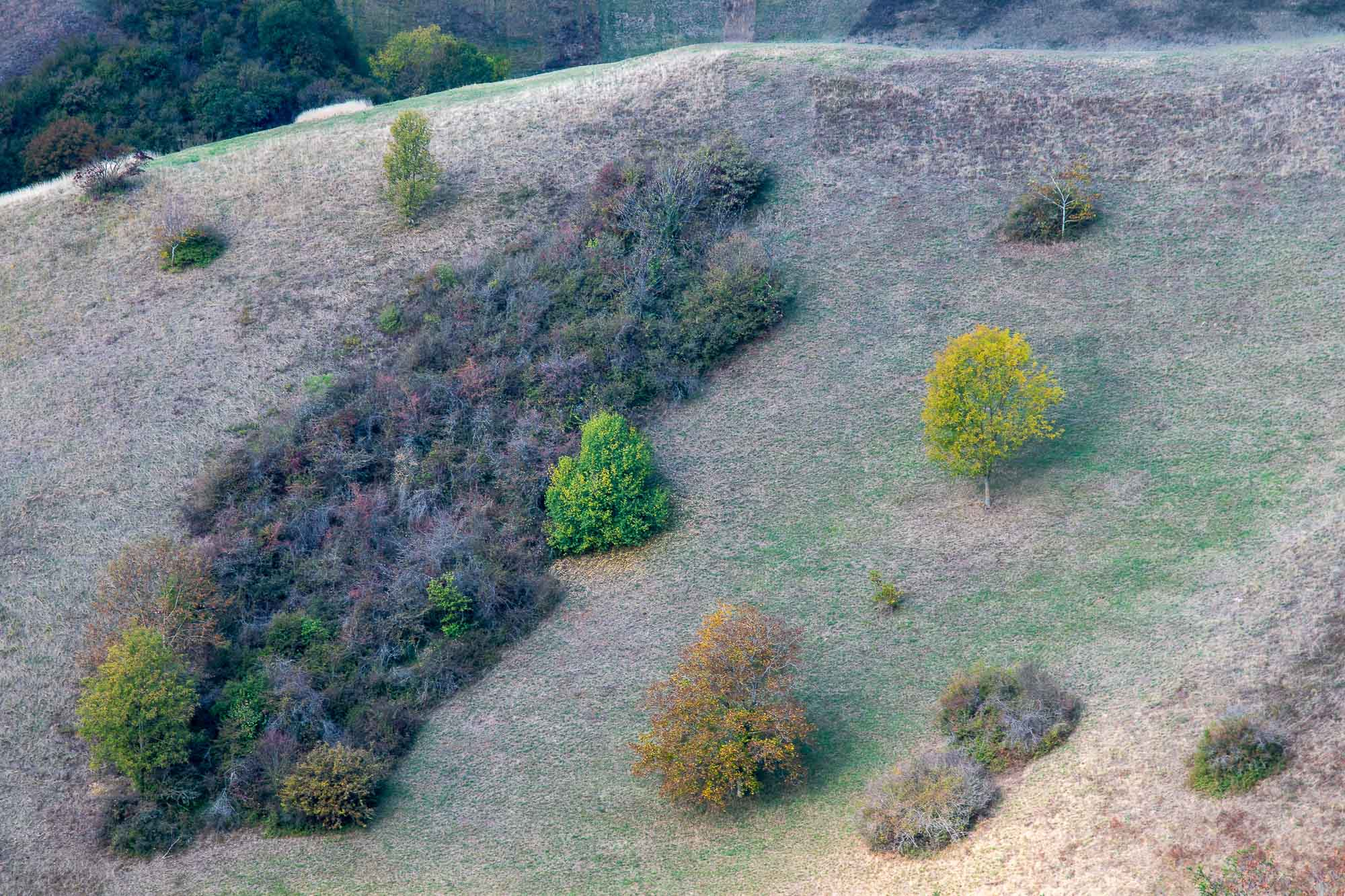 Gebüsch-Kampfzone