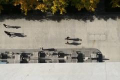 phonsography/Herbst von oben