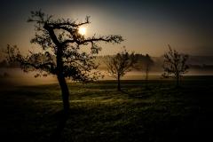 UnclePete / Obstgarten an einem Herbstmorgen