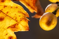 peter / Herbst-Farben