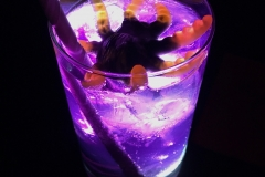 Purple Rain Gin Tonic