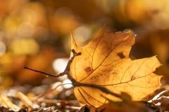 venolab / Herbst