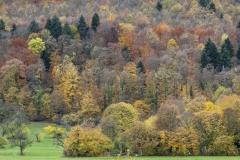 alopecosa / Schönberg in Herbstfarben