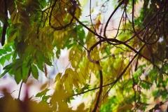 Cthulhusnet / Kodak UltraMAx 400 (Herbst)