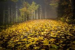 schneehaesli / Blätterteppich
