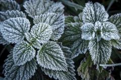 phonsography/der Winter kommt