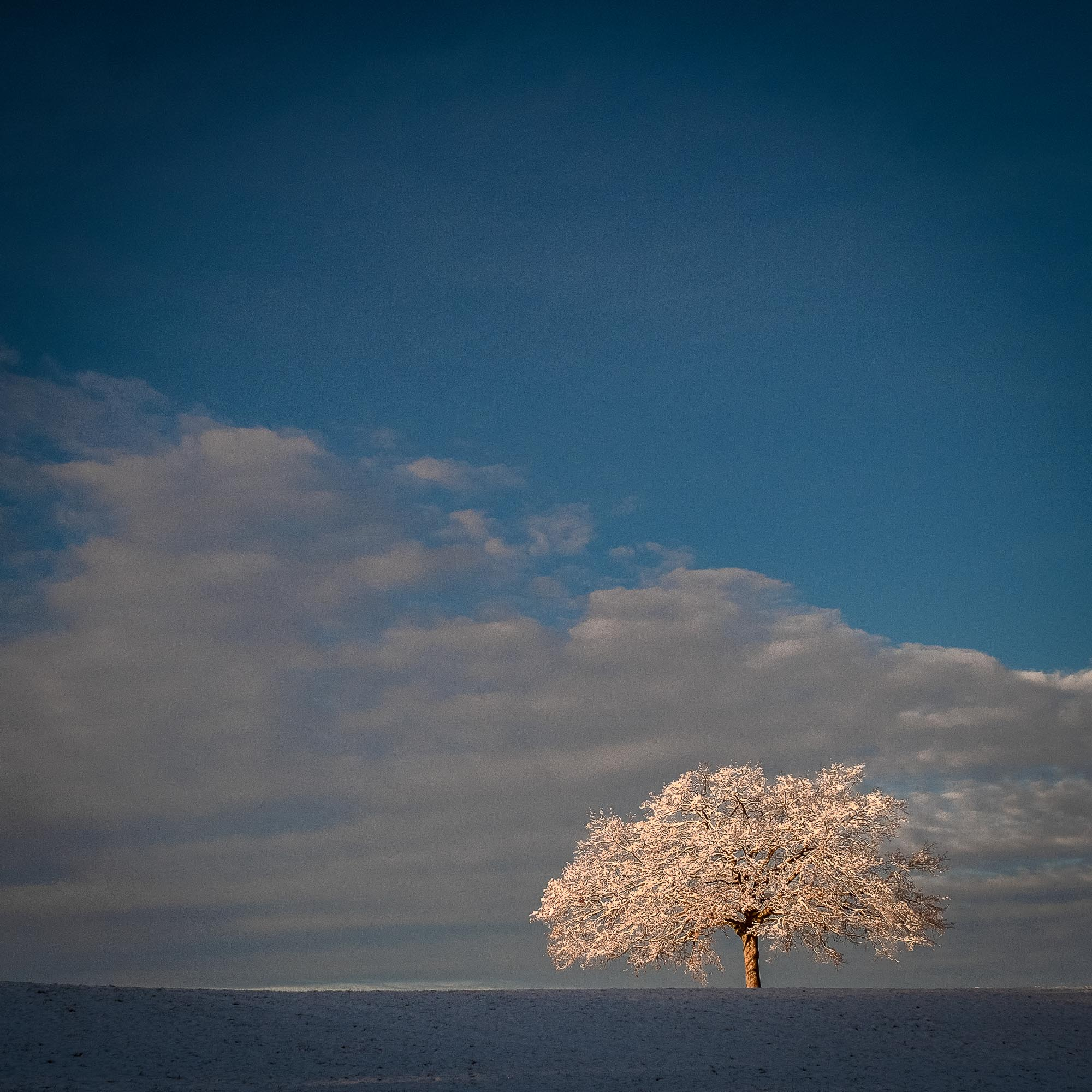 UnclePete / frisch beschneiter Obstbaum in der Morgensonne