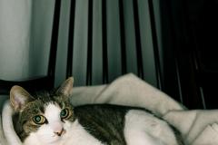 mstrombone / Madame Mimi auf dem Schaukelstuhl