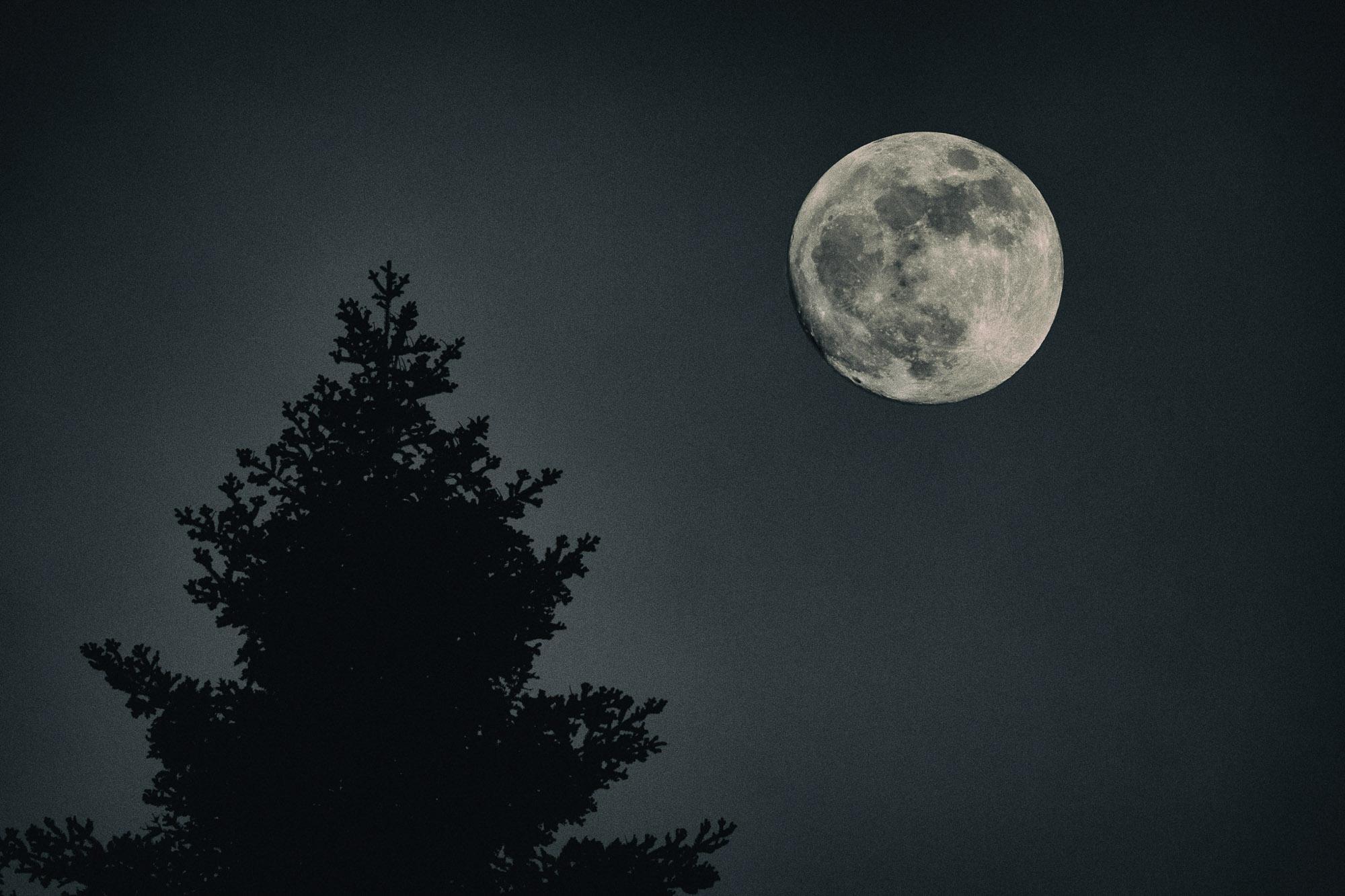 venolab / Mond