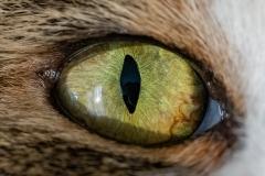 venolab / Saurons Auge