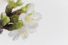 peter / Frühling #2