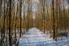 ruebyi / durch den Wald