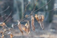 dagmar/ klirrender Frost