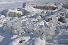 hermancheruscer / Eis am Stiel