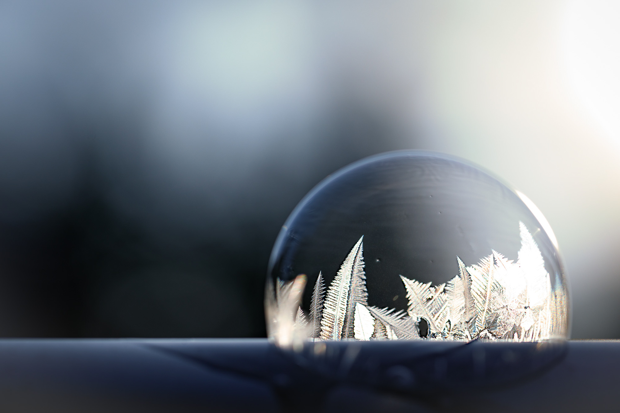 venolab / frosty bubble